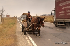 Horse drawn farmer's cart, Tohanu Nou, Romania