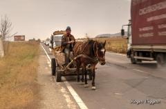 Horse drawn farmer's cart, Tohanu Nou, Romania